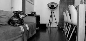isolamento em tempos estranhos: um convite a olhar pra dentro