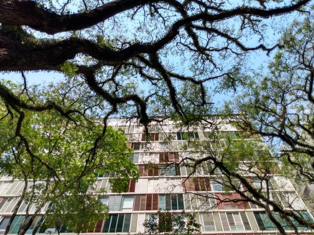 Como está a nossa Relação com o Verde na Cidade de São Paulo?